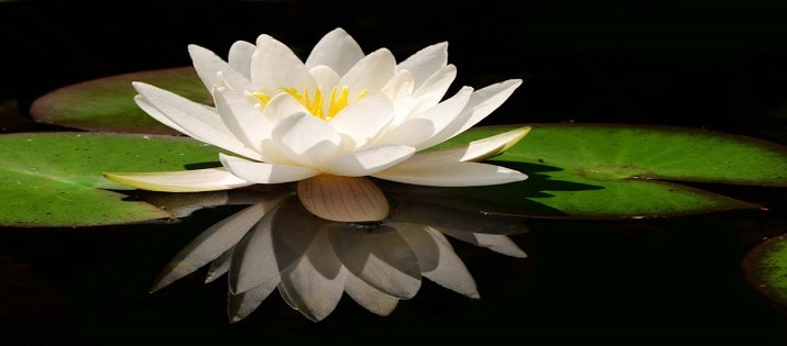 mindful self-compassion lily