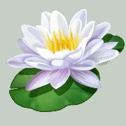 Self-compassion lily